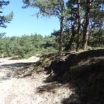 las sosnowy w pobliżu ośrodka